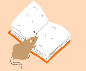 Rat fell asleep Reading a Book