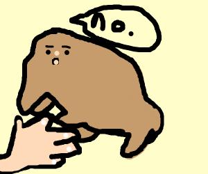 fat doggo says no