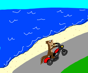 A ferret on a motorcycle at the ocean shore