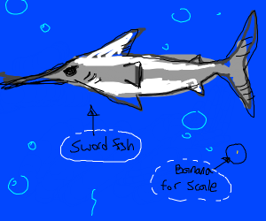 Very, very large swordfish