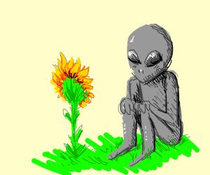 Alien meets Sunflower