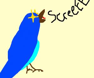Blue bird SCREEEEEEE