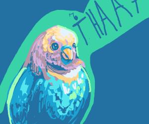 Sick bird singing tha song