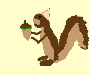 squirrel eats nut