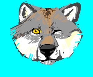 wolf head winking
