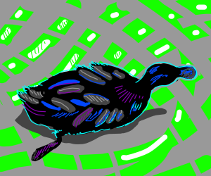 black duck in a pond