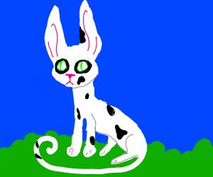 a bunny cat hybrid