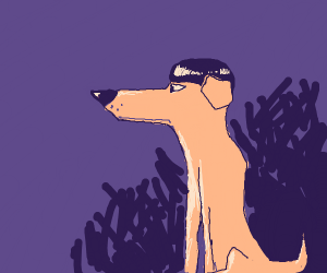 dog with bowl cut and pointy snout