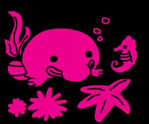 Blobfish and seahorse.