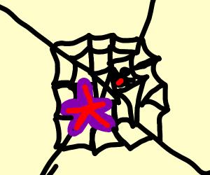 starfish stuck to web