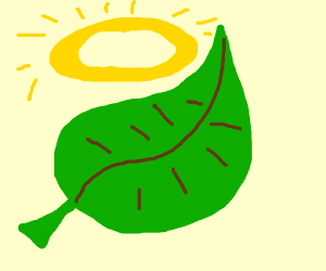 THE HOLY LEAF