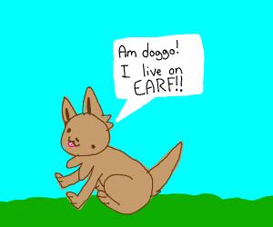 Earth doggo