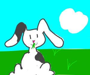cute black and white bunny eating yummy grass
