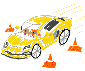 Dog and cat learn to drive a Lamborghini