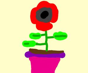 A rose in a flower pot