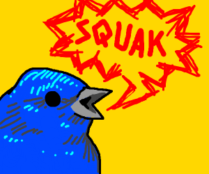 blue bird squaks