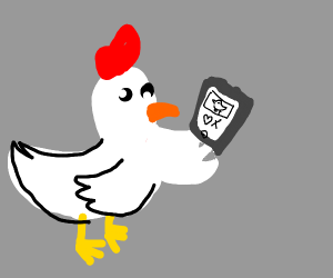 Chicken using a dating app