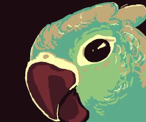 Mint green conure