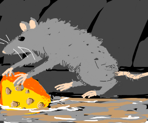 fancy rat finds cheese