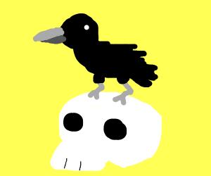 Raven on a skull
