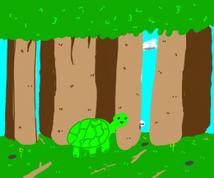 turtle in a forest