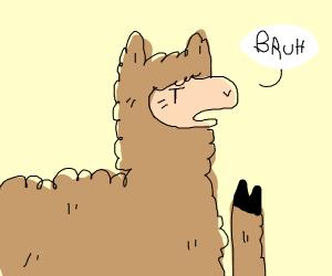 llama saying ''bruh''