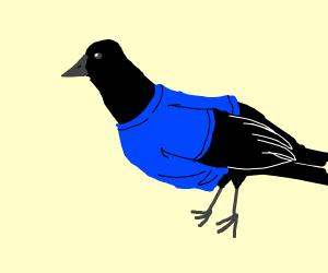 Raven wearing a T-Shirt