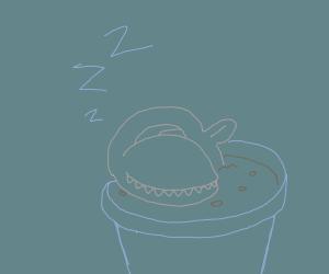 flytrap plant sleeping soundly