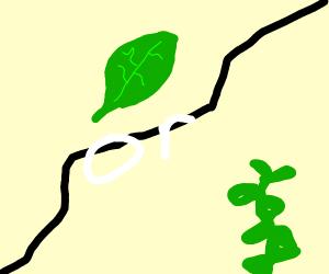 Leaf or Leaf?