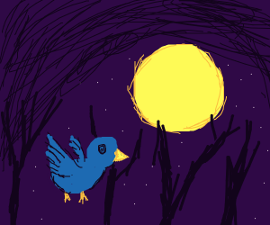 blue bird flying in the night sky