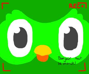 Duolinguo bird speaks French to camera
