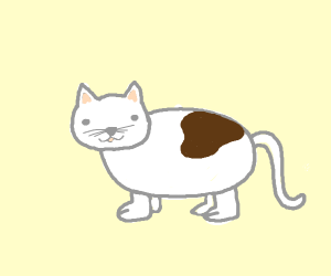 White cat with brown spot and feet