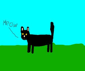 Black cat saying meow