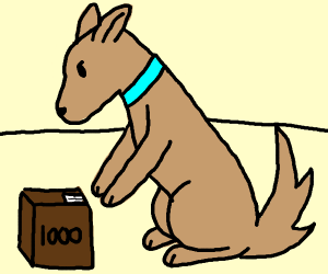 Dog picking up a 1000 box