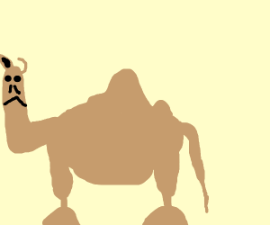 Thicc Camel