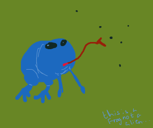 Blue frog catching flies