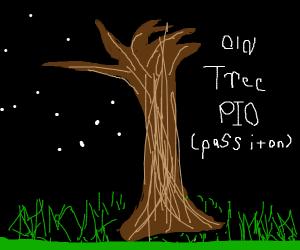 Old Tree (PIO)