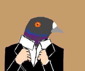 Bird in a tuxedo