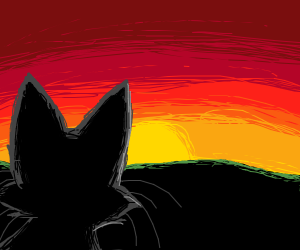 Cat watches the sun set in the distance
