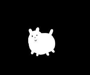a round fluffy dog