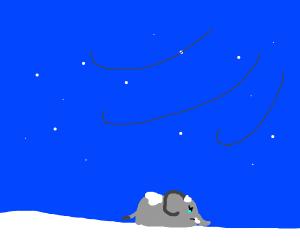 sad elephant in snow storm
