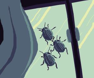 beetles on window