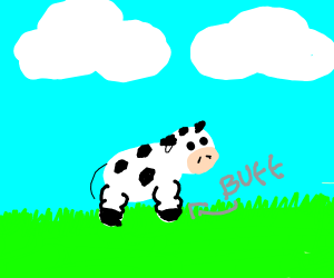 Muscular cow