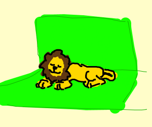 Lion in Front of a Green Screen