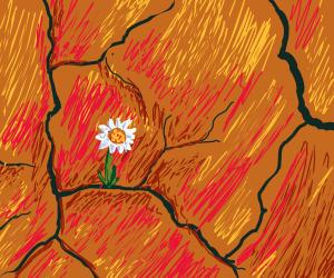 Daisy in the desert