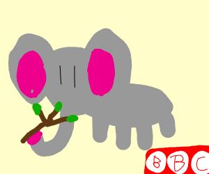 BBC  elephants