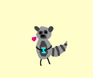 A raccoon loves soda