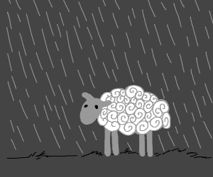 A sheep in the rain?