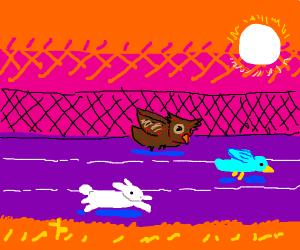 bunny, owl and bird racing