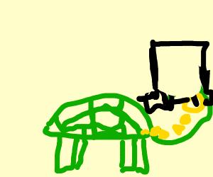 Fancy turtle